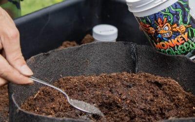 Microorganismos: una gran aportación a tus cultivos Los microorganismos son los grandes aliados del cultivador de cannabis